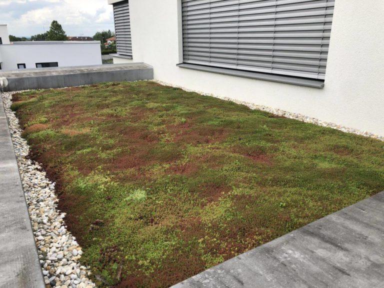 Pestrofarebné rozchodníky - Extenzívna zelená strecha, Záhorská Bystrica