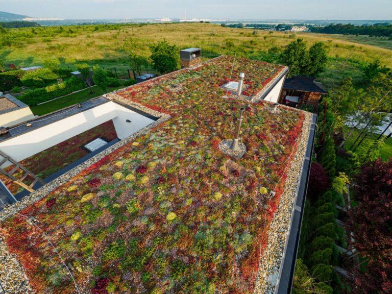 Extenzivna zelená strecha