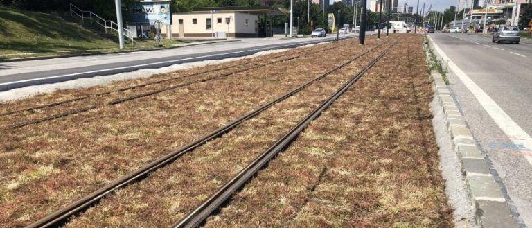 Karloveska-radiala-rozchodnikovy-koberec