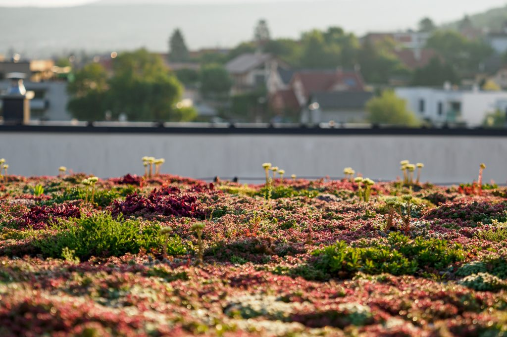 zelena-strecha.sk